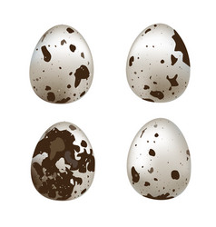 isolated quail eggs set of quail eggs isolated on vector image