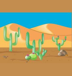 scene with cactus in desert field vector image