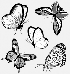 tattoo butterflies vector image