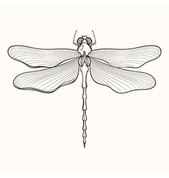Hand drawn engraving sketch of dragonfly for vector