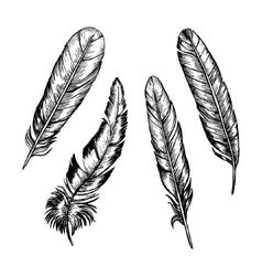 Feathers Set Hand Draw Sketch vector image