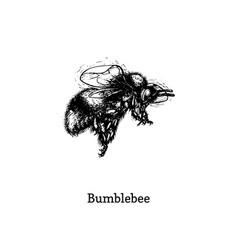 bumblebee in flight hand vector image