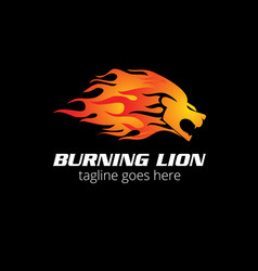 burning lion vector image