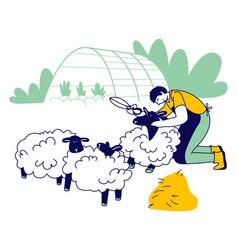 Man farmer shearing sheep for wool sheepshearer vector