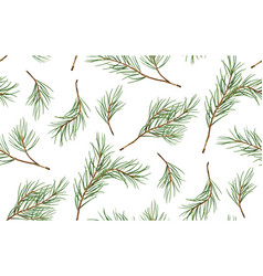 Seamless pattern of pine christmas spruce vector