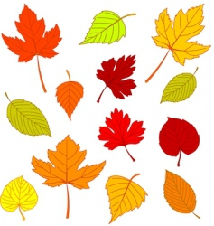 autumn leaves on white vector image vector image