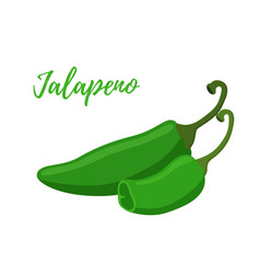 Cartoon jalapeno slices hot green pepper vector