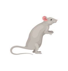 Cute domestic mouse standing on hind legs side vector