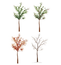 four-seasons trees vector image