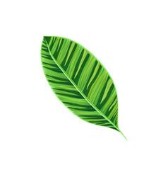 Leaf tropical plant tropic botany element vector