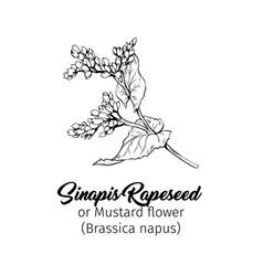 Mustard flower black ink sketch vector