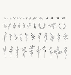 Set elegant floral elements vector