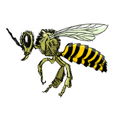 sketch of bee vector image