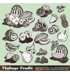 vintage fruits collection vector image