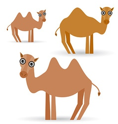 Funny camel on white background vector image vector image