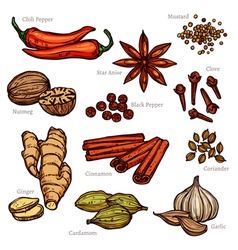 Sketch Herbs And Spice Color Set vector image