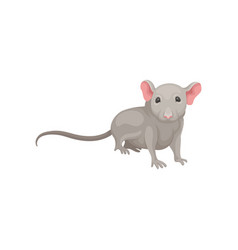 Flat icon of small mouse domestic rodent vector
