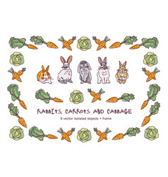 rabbits carrots cabbage and border isolate objects vector image