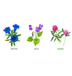 wild field plants and flowers set hand drawn vector image