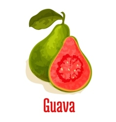 Guava fresh juicy tropical fruit icon vector image vector image