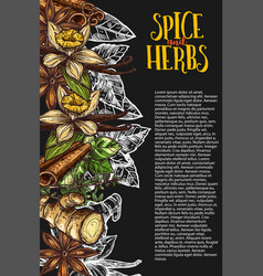 Herb and spice chalkboard banner with spicy plant vector
