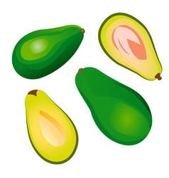 avocado fruit isolated on a white background vector image