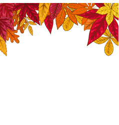 border with autumn leaves design element vector image