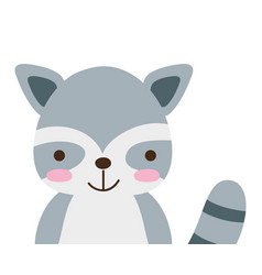 Colorful adorable and happy raccoon wild animal vector