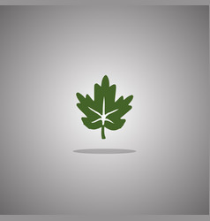 maple leaf green isolated vector image
