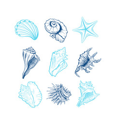 seashells freehand set vector image