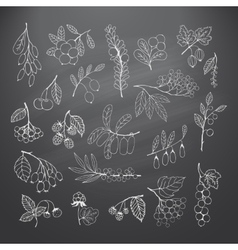 Set of garden and wild hand-drawn chalk berries vector image
