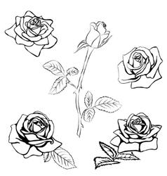 Set Rose sketch vector image vector image