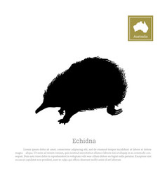 black silhouette of echidna on a white background vector image vector image