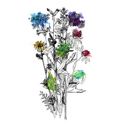 bouquet with drawing wild plants vector image