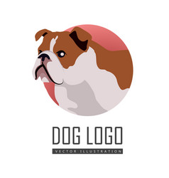 bulldog dog logo on white background vector image