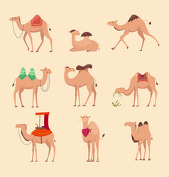 desert camels african funny animals vector image