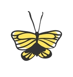 Isolated butterfly Hand drawn vector
