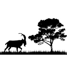 Silhouette of goat and tree vector