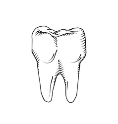 tooth Dental medicine health vector image