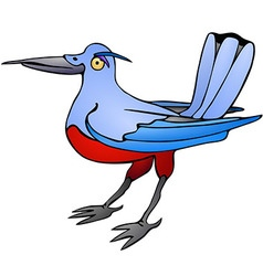 Bird with red belly vector image vector image