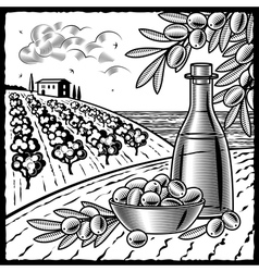 Olive harvest black and white vector image vector image