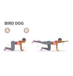 African american woman doing bird dog exercise vector