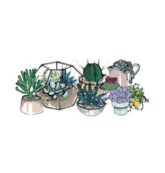 cactus and succulents composition collection vector image