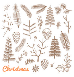 Hand drawn fir and pine branches fir-cones vector