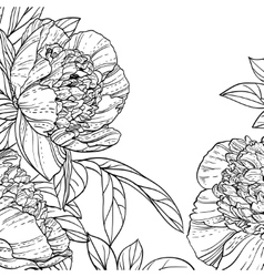 Peonies black line art background vector image