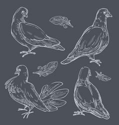 Pigeons monochrome set doves wild birds vector