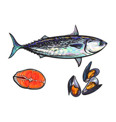 Sketch fish tuna salmon steak mussels vector