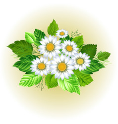 Beautiful chamomile bouquet vector