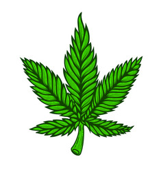 Cannabis leaf on white background design element vector