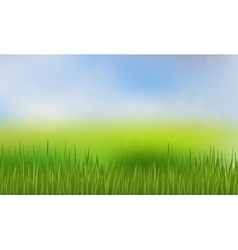 Green Grass and Blue Sky Background vector image vector image